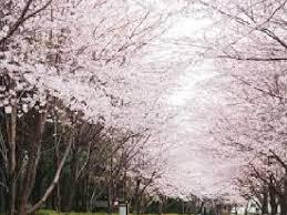ドッグラン・千葉県立青葉の森公園