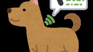 マイクロチップを入れている犬