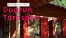 滋賀県大津市にある柴犬専用ドッグラン・たろさく(tarosaku)の営業日、料金、住所、広さなど紹介♫